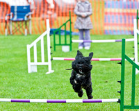 Chalgrove Fun Dog Day 2013 - Agility